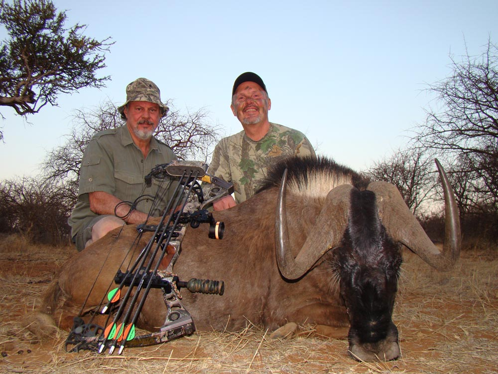 Bow hunting Black Wildebeest in South Africa at Bushmen Safaris