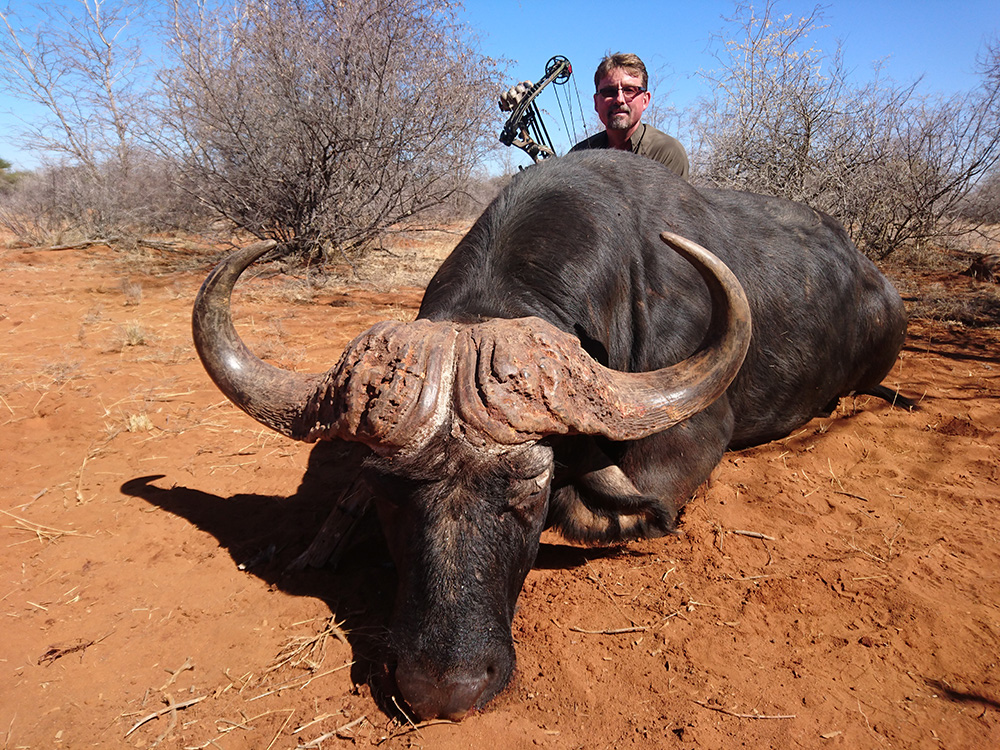 Bow hunting Cape Buffalo in South Africa at Bushmen Safaris