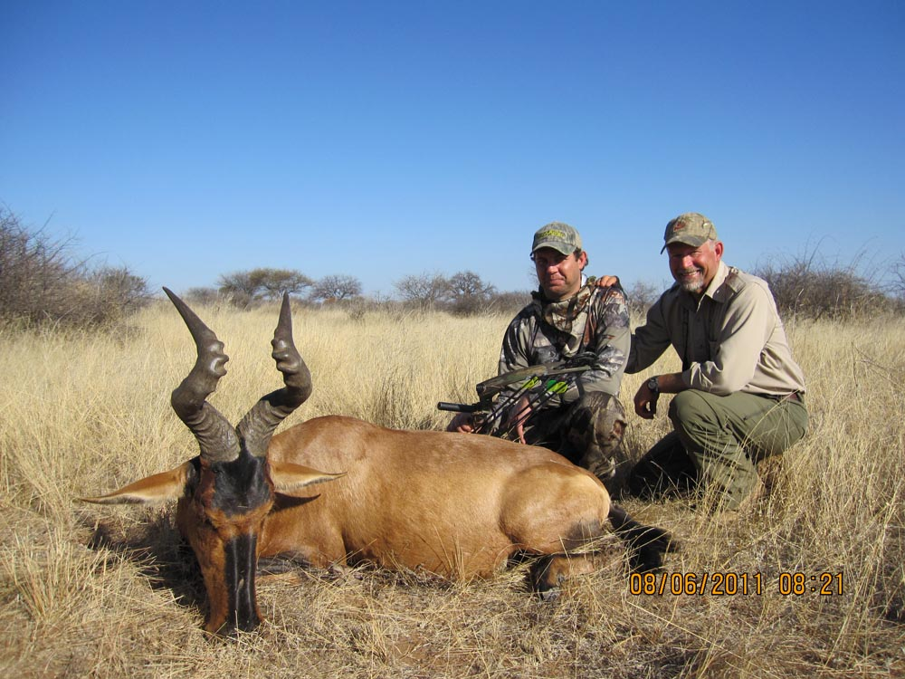 Bow Hunting Red Hartebeest in South Africa at Bushmen Safaris